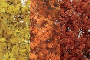 Mix podzimního listí (Fine-Leaf Foliage™  Fall Mix) - F1135