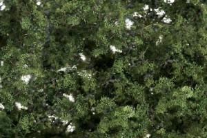 Zelené listí (Fine-Leaf Foliage™  Medium Green) - F1131