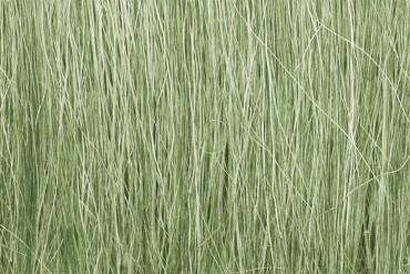 Světle zelená polní tráva (Field Grass Light Green) - FG173